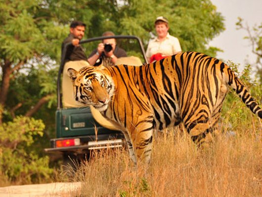 Signature-WildLife-Safari-Tour