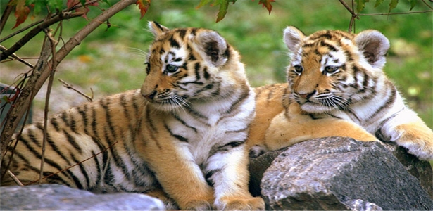 Golden Triangle & Tiger Safari Tour