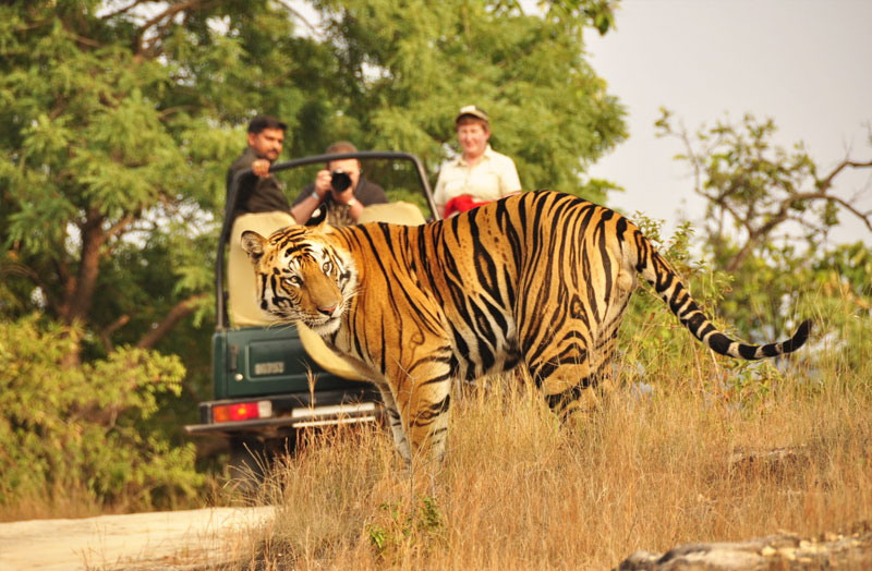 Ranathambhor Wildlife Tour